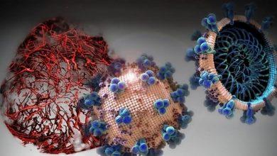 Photo of بزرگترین منبع ویروس کرونا شناسایی شد